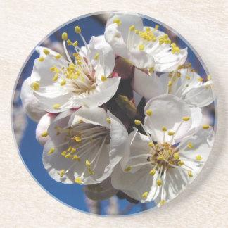 Aprikosen-Blüten Untersetzer