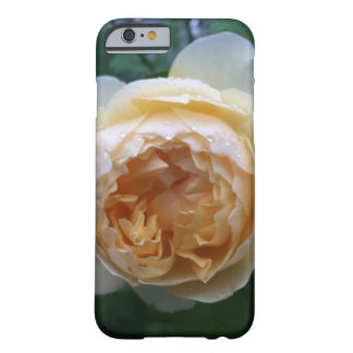 Aprikosen-Kohl-Rose iPhone Fall Barely There iPhone 6 Hülle