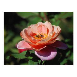 Aprikosen-und Lavendel-Rose mit Bienen-Postkarte Postkarte
