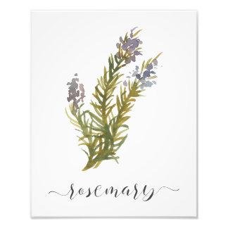 Aquarell-botanischer Kraut-Druck Rosemary Fotodruck