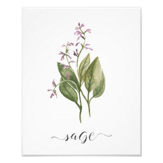 Aquarell-botanischer Kraut-Druck-Salbei Fotodruck