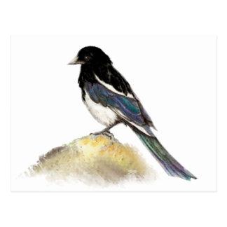 Aquarell-Elster-Garten-Vogel-Natur Postkarte