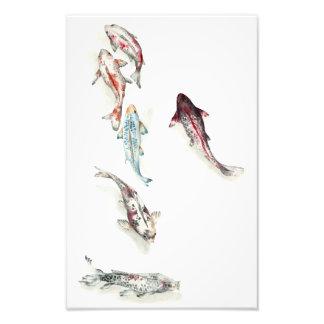 Aquarell Koi Fische Fotodruck