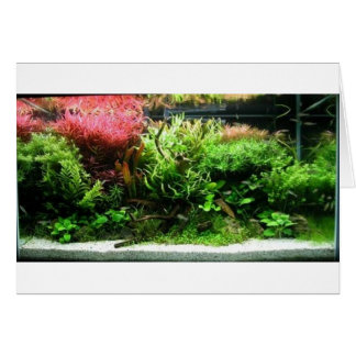 Aquascape Karte