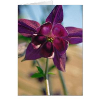 Aquilegia gemeine Blumenkarte Karte