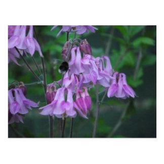 Aquilegia und Biene Postkarte