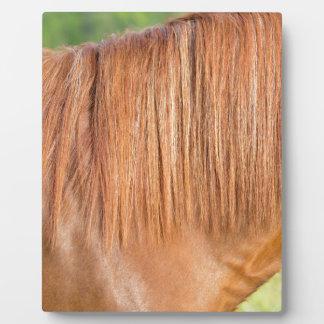 Arabisches braunes Pferd in der nahen Ansicht der Fotoplatte
