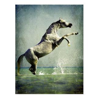Arabisches Pferd im Wasser Postkarte