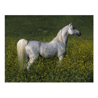 Arabisches Pferd stehend in den Blumen Postkarten