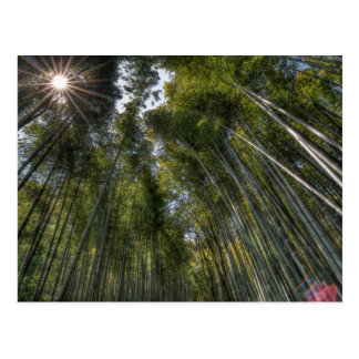 Arashiyama Bambuswaldung - Kyoto, Japan Postkarte