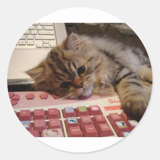 Arbeitet für eine Katzenminze Runde Sticker