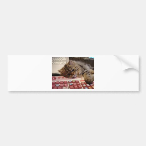 Arbeitet für eine Katzenminze Auto Sticker