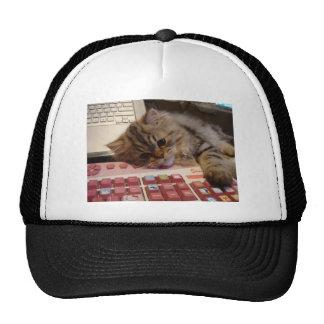 Arbeitet für eine Katzenminze Netz Caps