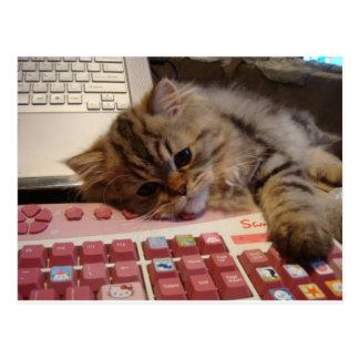 Arbeitet für eine Katzenminze Postkarte