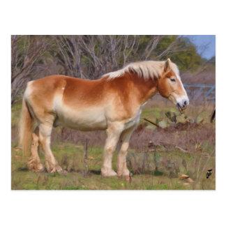 Arbeits-Pferd im Hügel-Land Postkarte