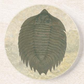 Arctinrus Boltoni Fossil Trilobite Sandstein Untersetzer
