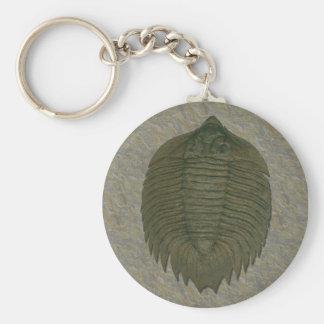 Arctinrus Boltoni Fossil Trilobite Schlüsselanhänger