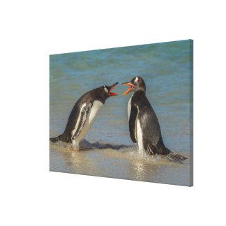 Argumentierende Pinguine, Falklandinseln Leinwanddruck