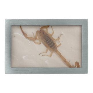 Arizona-Barken-Skorpion Rechteckige Gürtelschnalle