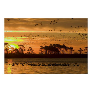 Arkansas-Sonnenuntergang-Szene Poster
