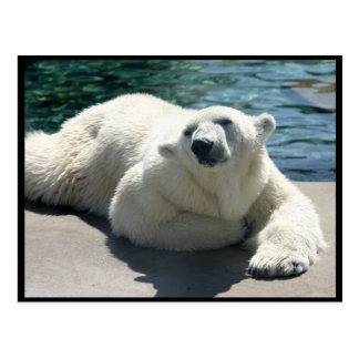 Arktische Eisbär-Postkarte Postkarte