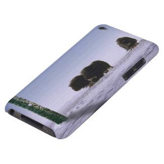 Arktische Moschus-Ochsen-heilige Tier-Tier-Kunst Barely There iPod Case