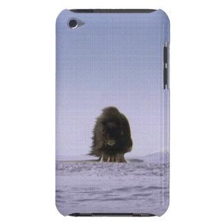 Arktische Moschus-Ochsen-heilige Tier-Tier-Kunst iPod Touch Hülle