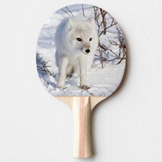 Arktischer Fox, Churchill Tier-Management-Bereich Tischtennis Schläger