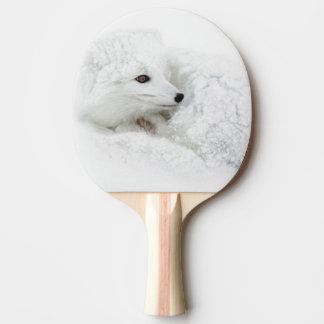 Arktischer Fox gekräuselt oben im Winter Tischtennis Schläger