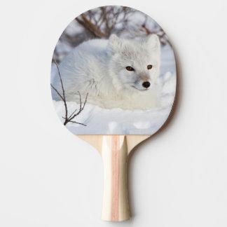 Arktischer Fox im Winter Tischtennis Schläger