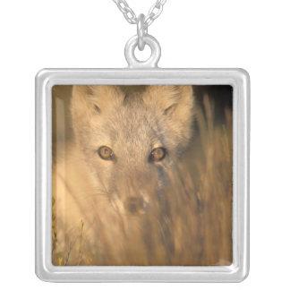 arktischer Fuchs, Alopex Lagopus, auf den 1002 Versilberte Kette