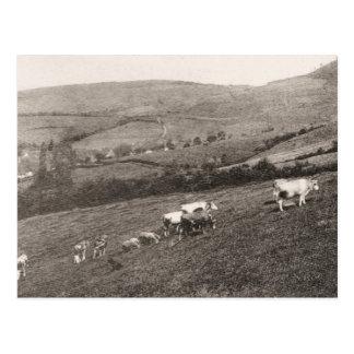Arlay und die umgebenden Weiden, Jura Postkarte