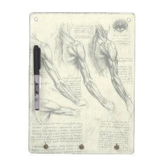 Arm-und Schulter-Anatomie durch Leonardo da Vinci Memoboard