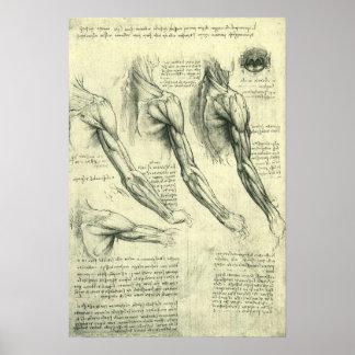 Arm-und Schulter-Anatomie durch Leonardo da Vinci Poster