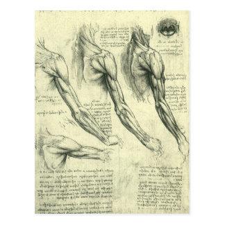 Arm-und Schulter-Anatomie durch Leonardo da Vinci Postkarte