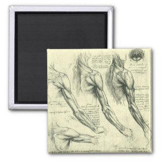 Arm-und Schulter-Anatomie durch Leonardo da Vinci Quadratischer Magnet