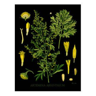 Artemesia Absinth Postkarten