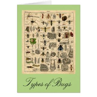 Arten Wanzen-der Vintagen Insekten-Diagramm-Karte Grußkarte