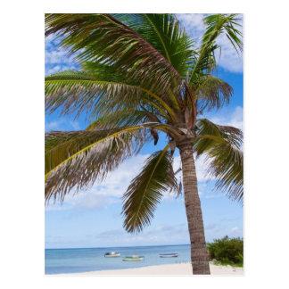Aruba, Palme auf Strand Postkarte