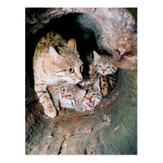 Asiatische Wildkatze Postkarte