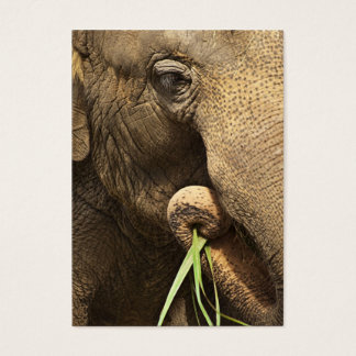 Asiatischer Elefant - ACEO 10 Visitenkarte