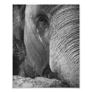 Asiatischer Elefant-Gesichts-Foto Photo Drucke