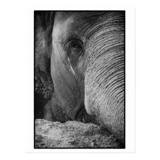 Asiatischer Elefant-Gesichts-Postkarte Postkarte