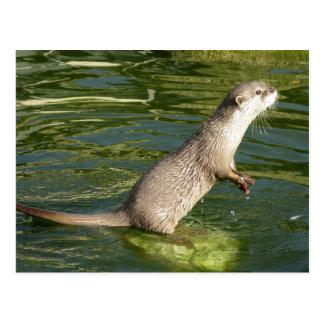 Asiatischer kurzer gekratzter Otter Postkarte