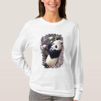 Asien, China, Sichuan-Provinz. Großer Panda oben T-Shirt