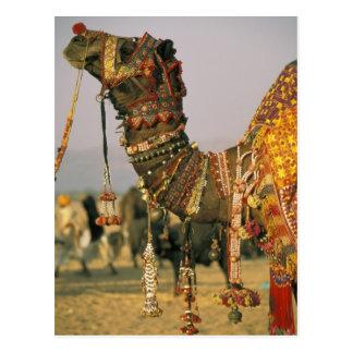 Asien, Indien, Pushkar. Kamel Shamu, Pushkar Postkarte