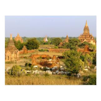Asien, Myanmar (Birma), Bagan (Heide). Postkarte
