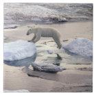 Asien, Russland, sibirische Arktis. Eisbär Keramikfliese
