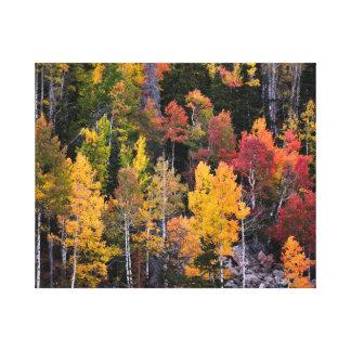 Aspen-Bäume im Fall Leinwanddruck