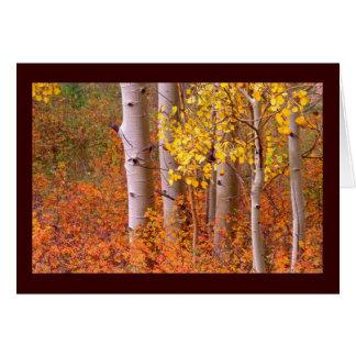 Aspen-Bäume im Herbst Karte